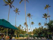Palmy i drzewa w Płaskim kurorcie Brazylia obrazy royalty free