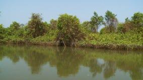 Palmy i namorzynowi krzaki na Kangy rzece, Myanmar zbiory wideo