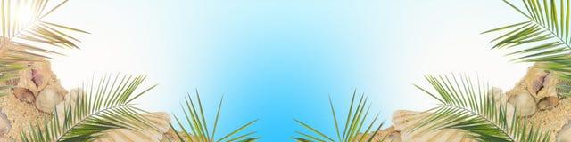 Palmy i skorupy Fotografia Stock