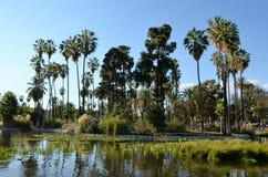 Palmy Kształtują teren na jeziorze fotografia royalty free