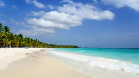 Palmy linia brzegowa na karaibskiej plaży, wyspa Saona fotografia royalty free