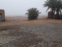 Palmy mgła i drzewa obrazy stock