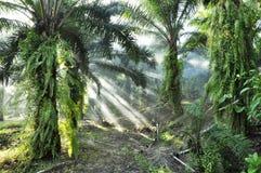 Palmy mgły Lekkiego dnia Plenerowy gospodarstwo rolne Obraz Royalty Free