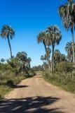 Palmy na El Dłoniowym parku narodowym, Argentyna zdjęcia royalty free