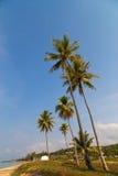 Palmy na Phu Quoc Obraz Royalty Free