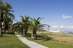 Palmy na plaży Obrazy Stock