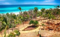 Palmy na plaży i turkusu morzu obrazy stock