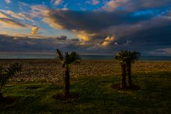 Palmy na plaży podczas zmierzchu czasu zdjęcia stock