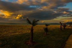 Palmy na plaży podczas zmierzchu czasu zdjęcia royalty free