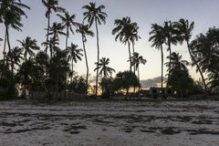 Palmy na plaży w Zanzibar zdjęcia stock