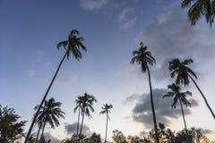 Palmy na plaży w Zanzibar zdjęcia royalty free