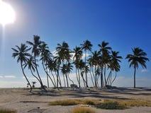 Palmy na plaży z osamotnionymi samochodami zdjęcie royalty free
