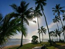 Palmy na plaży zdjęcia royalty free