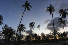 Palmy na plaży w Zanzibar Zdjęcie Stock