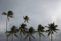 Palmy na plaży z chmurnym niebem Obraz Stock