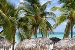 Palmy na Varadero wyrzucać na brzeg w Kuba blisko oceanu obrazy stock