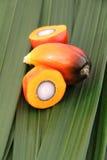 Palmy nafciana owoc Obraz Stock