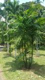palmy photo libre de droits