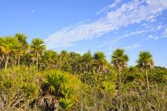 palmy niebo fotografia stock