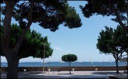 Palmy nowa Mallorca Zdjęcia Royalty Free
