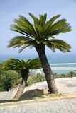 palmy oceanu 2 Fotografia Stock