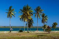 Palmy plaża Mafijna wyspa Obrazy Stock