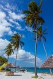 Palmy plaża Mafijna wyspa Obrazy Royalty Free