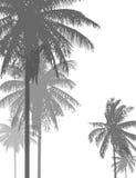 Palmy plaża 19 Fotografia Stock