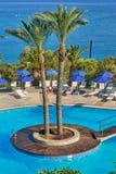 Palmy po środku basenu Zdjęcia Royalty Free