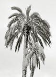 Palmy pod śniegiem zdjęcia stock