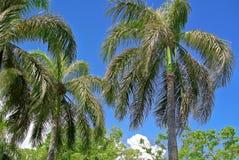 Palmy przeciw niebu Obrazy Stock