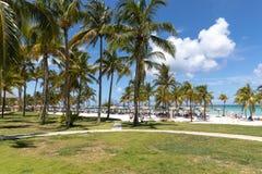 Palmy przy kurortem na Varadero wyrzucać na brzeg w Kuba blisko oceanu zdjęcie royalty free