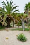 Palmy przy Montjuic kaktusa ogródem przy Barcelona Fotografia Royalty Free
