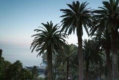 Palmy przy morze plażą zdjęcia stock