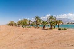 Palmy przy Nowym Marina jeziorem w Eilat, Izrael zdjęcie stock
