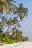 Palmy przy plażą Obrazy Royalty Free