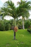 Palmy przy Vidanta Riviera majowiem obrazy royalty free