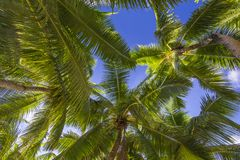 Palmy, Seychelles Zdjęcia Stock