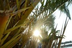 Palmy strand och solnedgång Arkivbild