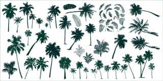 palmy tropikalne ilustracja wektor