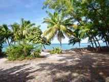 Palmy w świetle słonecznym obrazy royalty free