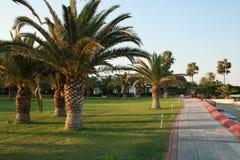 Palmy w ładnym ogródzie Obraz Royalty Free