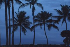 Palmy w Błękitnym półmroku zdjęcia stock