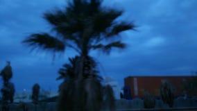 Palmy w centrum miasta przy jutrzenkowym czasem zbiory