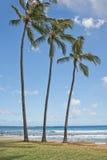 Palmy w Hawaje Poipu plaży krajobrazie zdjęcie royalty free