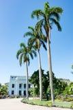 Palmy w Leoncio Vidal ` s parku, Santa Clara, Kuba zdjęcie stock