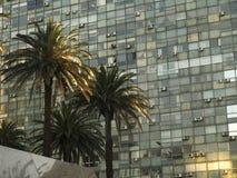 Palmy w Montevideo z budynkiem zdjęcia stock
