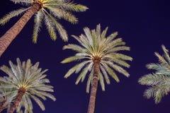 Palmy w Palermo zdjęcie royalty free