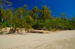 Palmy w przylądka Hillsborough parku narodowym Zdjęcia Stock