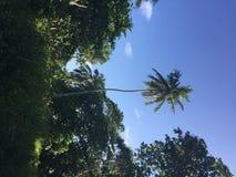 Palmy w tropikalnym miejscu Maldives, Azja obrazy royalty free